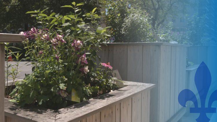 Bacs à fleurs(2)